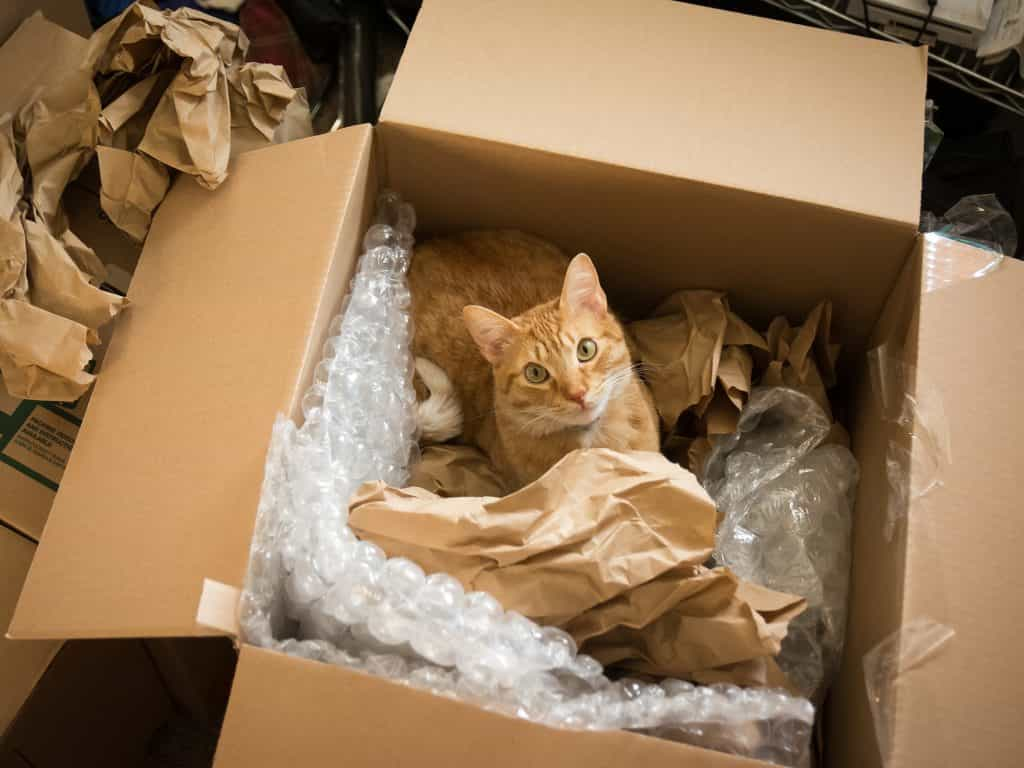 Cat in the moving box